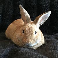 Adopt A Pet :: Jinkies - Watauga, TX