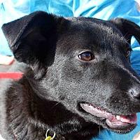 Adopt A Pet :: BOBO - Westminster, CO