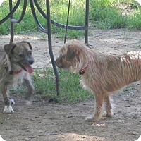 Adopt A Pet :: Lilly & Tilly - Clarksville, TN