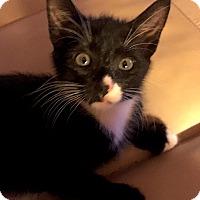 Adopt A Pet :: Jayfeather - Monroe, GA