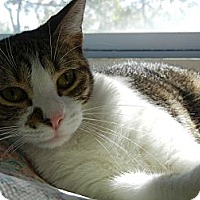 Adopt A Pet :: Cheri - Miami, FL