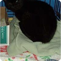 Adopt A Pet :: Magic - Westfield, MA