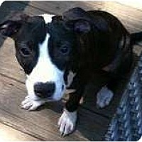 Adopt A Pet :: Darby - Rochester, NY