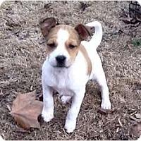 Adopt A Pet :: Joy - Glastonbury, CT