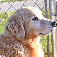 Adopt A Pet :: Ben - New Canaan, CT