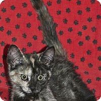 Adopt A Pet :: Jayda - Sunderland, ON