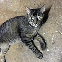 Adopt A Pet :: Gretta - Acushnet, MA