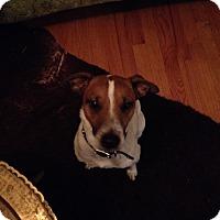 Adopt A Pet :: Hank - Humble, TX