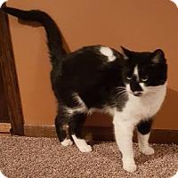 Adopt A Pet :: Callisto - Forest Lake, MN