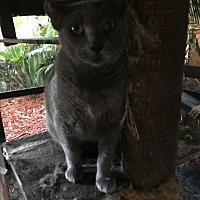 Adopt A Pet :: Zeus - Lauderhill, FL