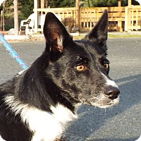 Adopt A Pet :: Roscoe - Grants Pass, OR