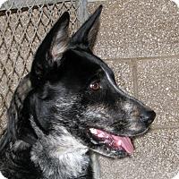 Adopt A Pet :: Lincoln - Ruidoso, NM