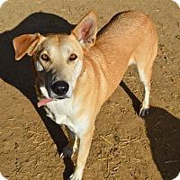 Adopt A Pet :: Haylee - Santa Barbara, CA
