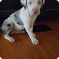 Adopt A Pet :: Monsier - Cleveland, OH