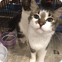 Adopt A Pet :: Spring - Boynton Beach, FL