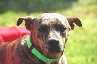 Terrier (Unknown Type, Medium) Mix Dog for adoption in Wharton, Texas - Ty