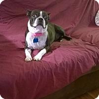 Adopt A Pet :: Luna - Huntingdon Valley, PA