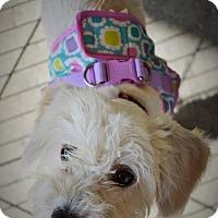 Adopt A Pet :: Jazzie - Redondo Beach, CA