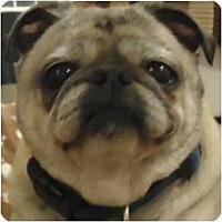 Adopt A Pet :: Archie - Beachwood, OH