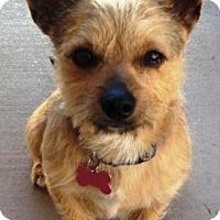 Adopt A Pet :: Smuckers - Gilbert, AZ