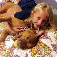 Adopt A Pet :: Ginger - Orlando, FL