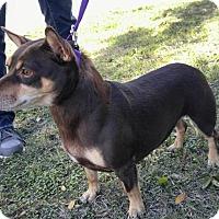Adopt A Pet :: Gracie - Lodi, CA