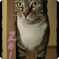 Adopt A Pet :: Zelda - Shippenville, PA