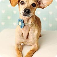Adopt A Pet :: Beatrice - Nashville, TN