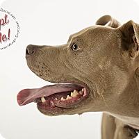 Adopt A Pet :: Poco - Gillsville, GA