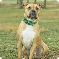 Adopt A Pet :: Hercules - Georgetown, KY