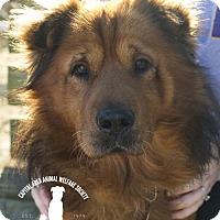 Adopt A Pet :: Teddy - Baton Rouge, LA