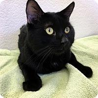 Adopt A Pet :: Kinkaid - Las Vegas, NV