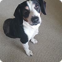 Adopt A Pet :: Roman - Cleveland, OH