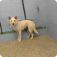 Adopt A Pet :: URGENT on 6/2 SAN BERNARDINO - San Bernardino, CA