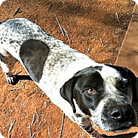Adopt A Pet :: Alonzo - Spartanburg, SC