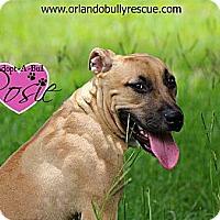 Adopt A Pet :: Rosie - Orlando, FL