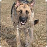 Adopt A Pet :: Dre - Hamilton, MT