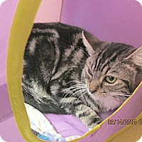 Adopt A Pet :: Perdito - Phoenix, AZ