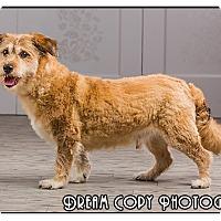 Adopt A Pet :: Sparky - Owensboro, KY