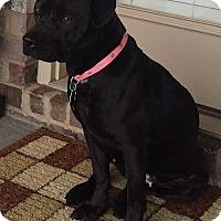 Adopt A Pet :: Lyric - Homewood, AL
