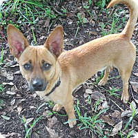 Adopt A Pet :: Mr. Tonley - Ormond Beach, FL