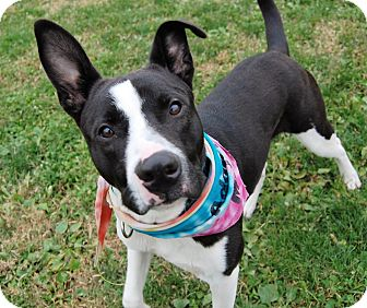 Terrier (Unknown Type, Medium) Mix Dog for adoption in Wilmington, Delaware - Panda