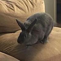 Adopt A Pet :: Pepper - Idaho Falls, ID
