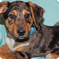 Adopt A Pet :: Saber (has been adopted) - Trenton, NJ