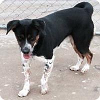 Adopt A Pet :: Snickers - Warren, ME