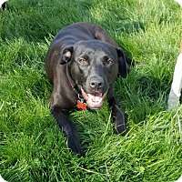 Adopt A Pet :: Florence - Potomac, MD