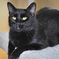 Adopt A Pet :: Adriana - Prescott, AZ