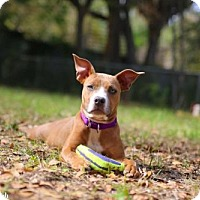 Adopt A Pet :: Maude - Gainesville, FL