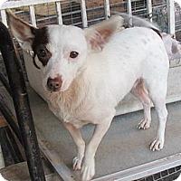 Adopt A Pet :: Tenille - San Ysidro, CA