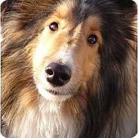 Adopt A Pet :: Tag - San Diego, CA